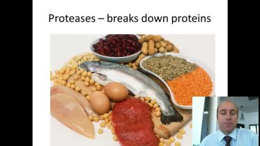 Protease - Importance