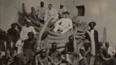 Ivory Trade - Elephant Population