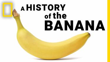 Banana - History of Cultivation