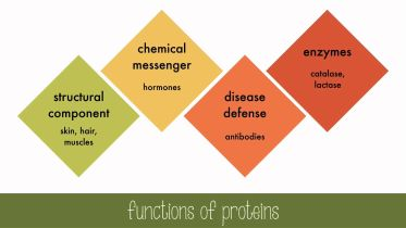 Proteins & Enzymes