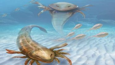 Eurypterid - Relationships with Other Groups