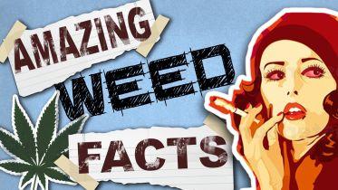 Marijuana - Facts