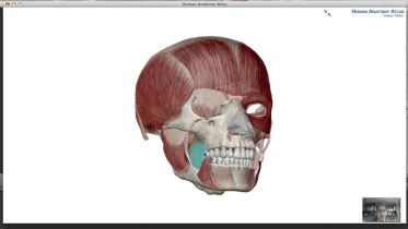 Facial Muscels - Muscles of Mastication