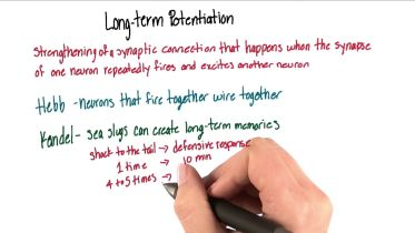 Memory - Long Term Potentiation