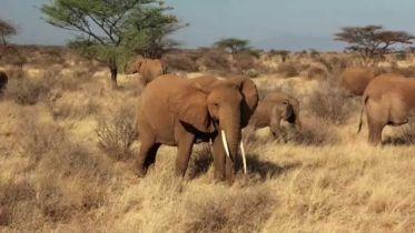 Elephant - Communication