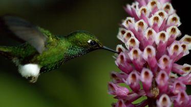 Hummingbird - Territory