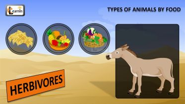 Food Consumption - Three Types of Animals