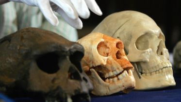 Homo Floresiensis - Scientific Research
