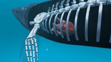 Blue Whale - 360 Vr