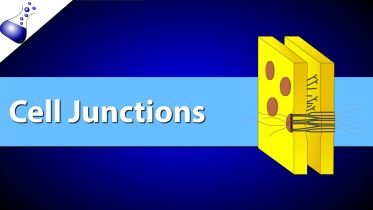 Cell Junction - Three Major Types