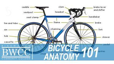 Bicycle - Anatomy