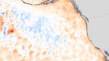 Warm Blob (Pacific Ocean) - Effects of El Niño