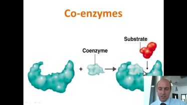 Enzymes - Co-Factors and Inhibitors