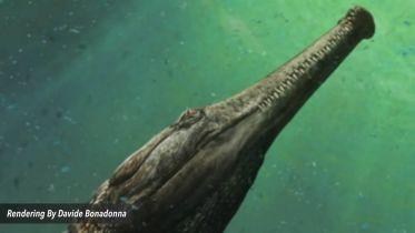 Saltwater Crocodile - Machimosaurus Rex