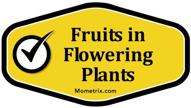 Plants - Categories of Fruits