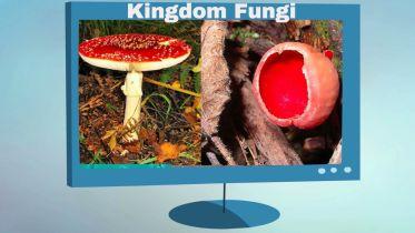 Fungi - Fungi Characteristics