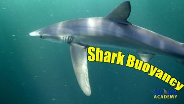 Shark - Buoyancy