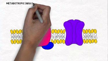 Brain - Neuro-Receptors