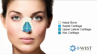 Nose - Anatomy