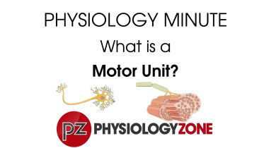 Motor Unit - Overview
