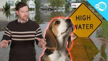 Natural Disaster - Prediction by Animal Behavior
