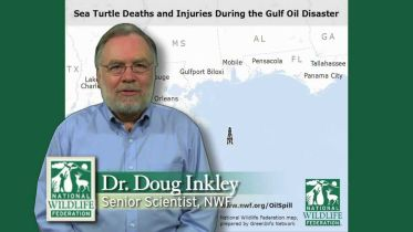 Deepwater Horizon Oil Spill - Impacts on Sea Turtle