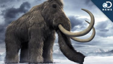 Woolly Mammoth - Brain Structure