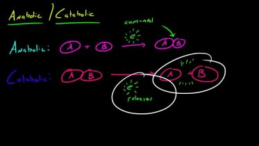 Anabolism and Catabolism