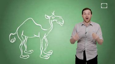 Camel - Hump