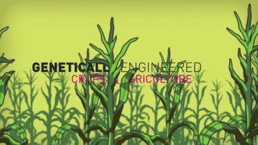 Genetic Engineering - GMO Disadvantages