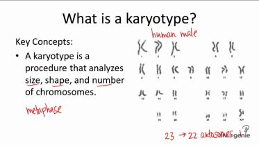 Genetics - Karyotype