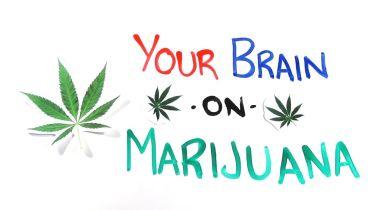 Marijuana - Effects on the Brain