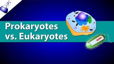 Prokaryotic V. Eukaryotic Cells