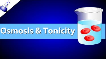 Cell - Tonicity