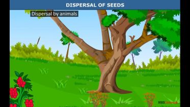Plants - Seed Dispersal