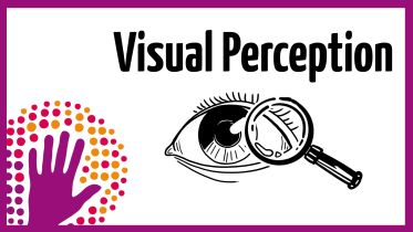 Brain - Visual Perception
