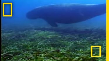 Dugong - Habitat