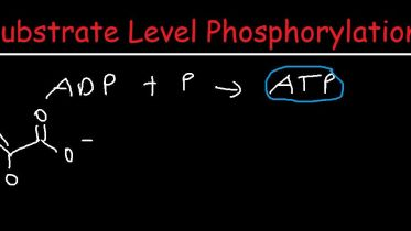Atp - Substrate-Level Phosphorylation