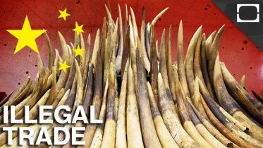 China - Wildlife Trafficking