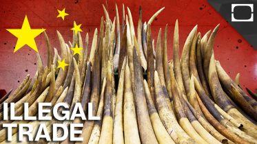 China - Wildlife Trafficking