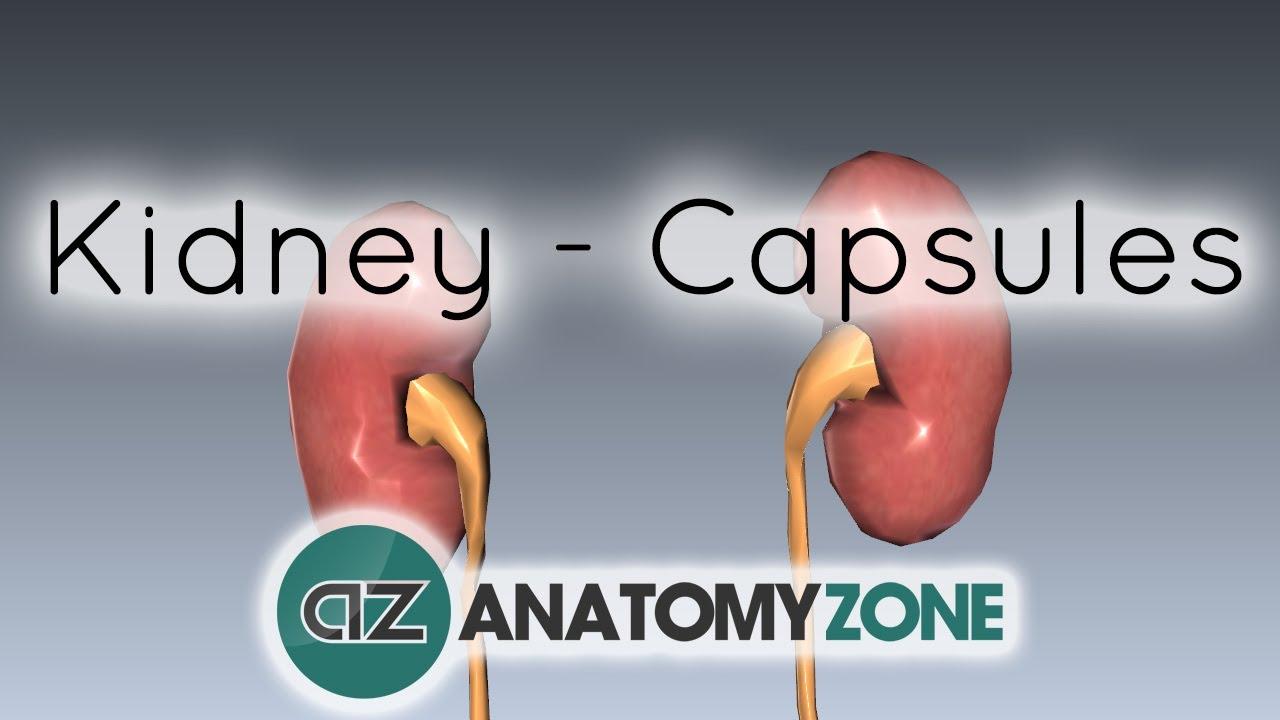 Kidney - Capsules of the Kidney