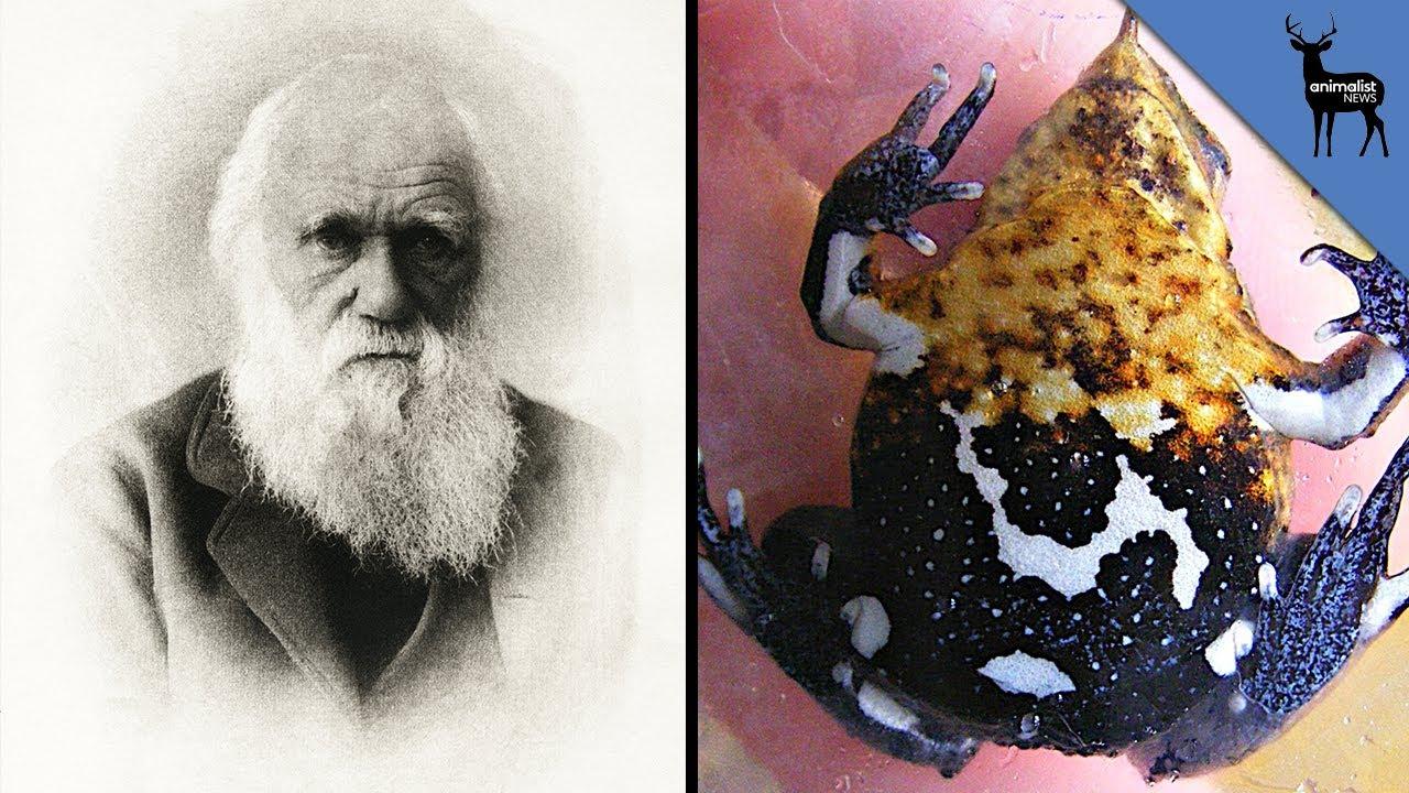 Darwin's Frog - Extinction