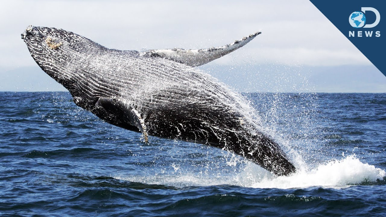 Whale - Tanning and Skin Pigmentation