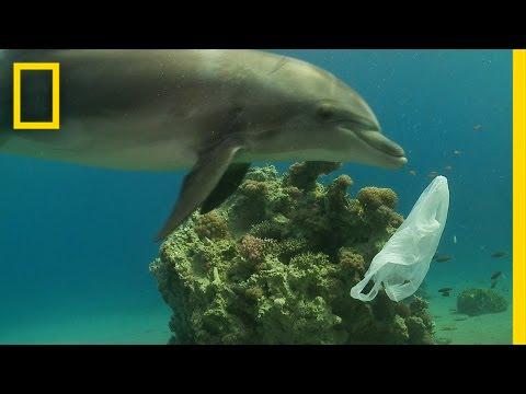 Ocean Pollution - Plastic Pollution