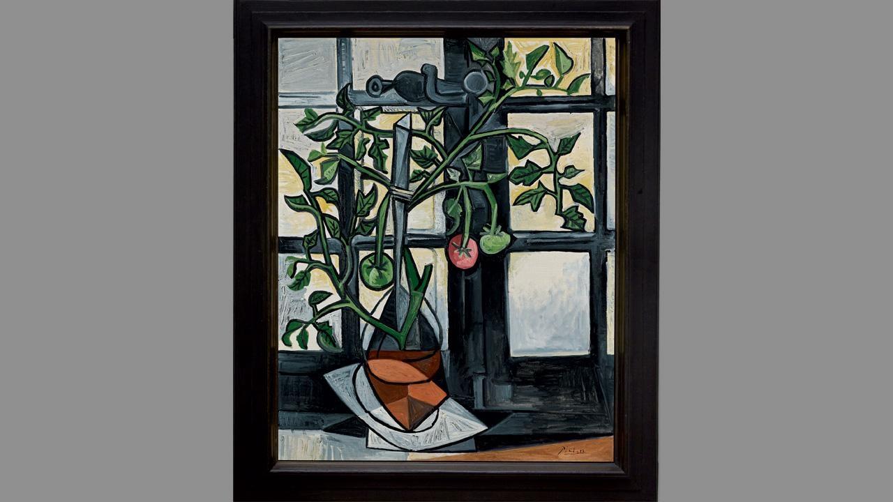 Plant de Tomates (Picasso)