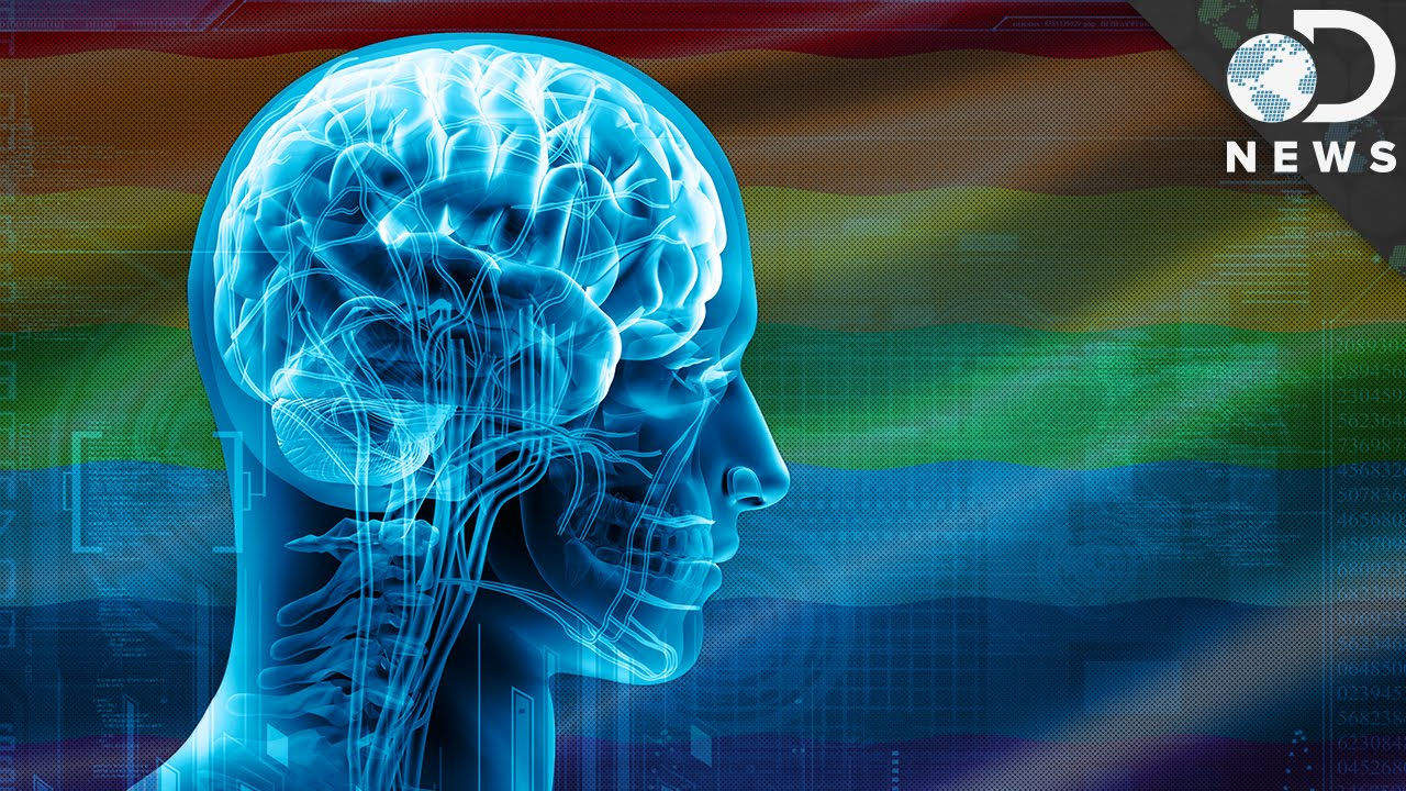 Brain - Gender and Sexuality