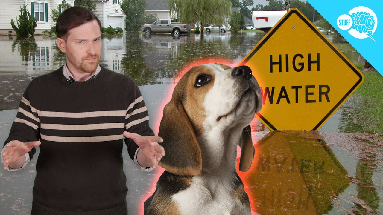 Natural Disaster - Prediction by Animal Behavior