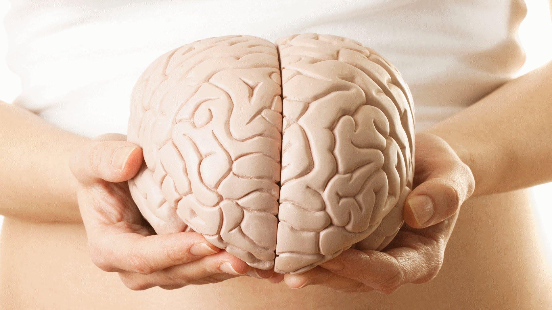 Brain - Gender Research