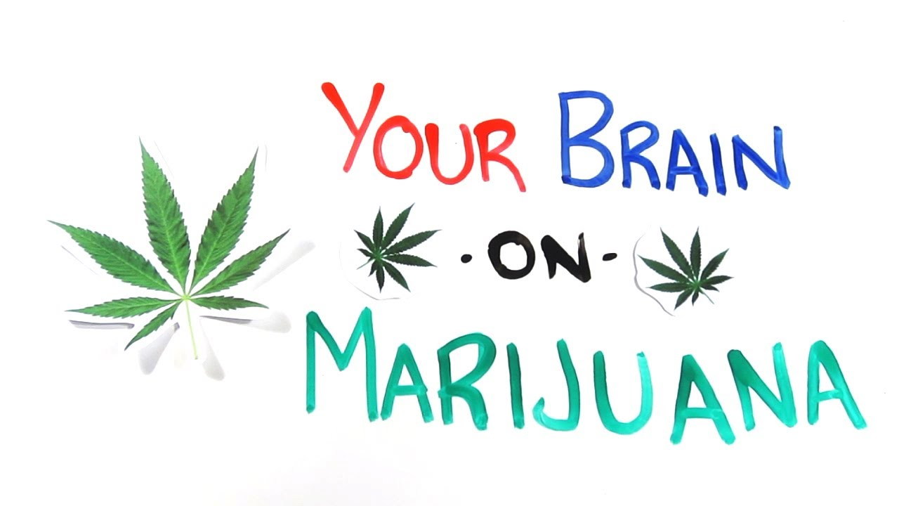 Marijuana - Effects on the Brain