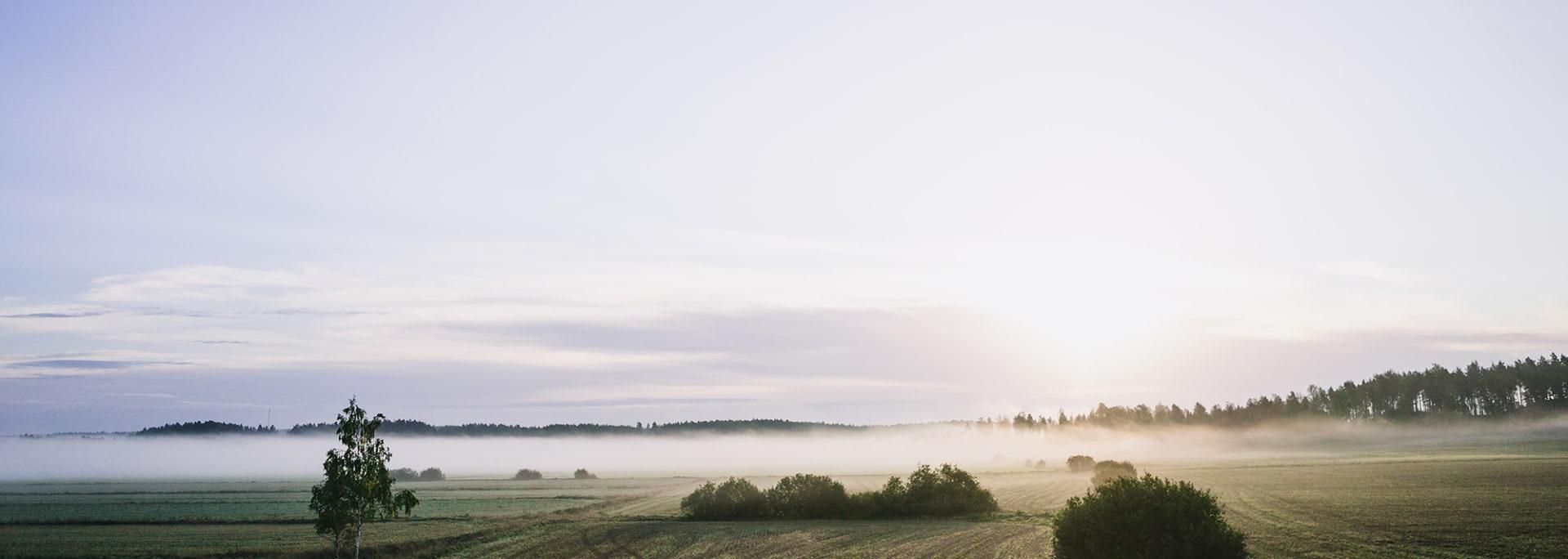 Nordiska ängar i morgonljus